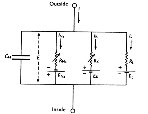 Circuit description of nerve cell